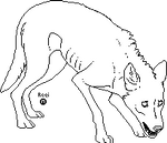 Malnourished Wolf Lineart