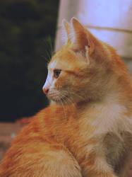 miauu