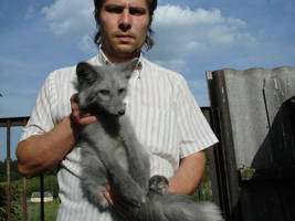 big blue fox by foxsvir