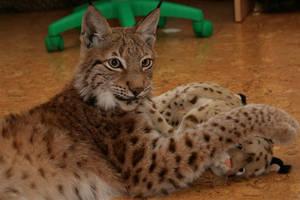 Lynx zen 5 by foxsvir