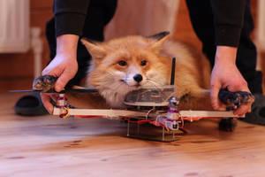 fox by foxsvir