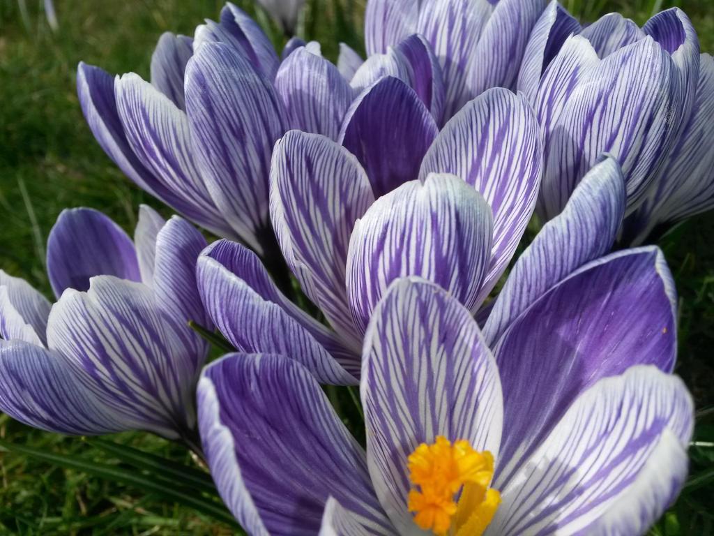 England park flowers by Virginijaa
