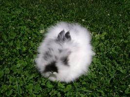Oreo Cookie Rabbit by MindOfPain
