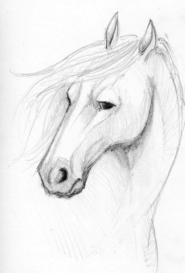 Horse face sketch by mareccc
