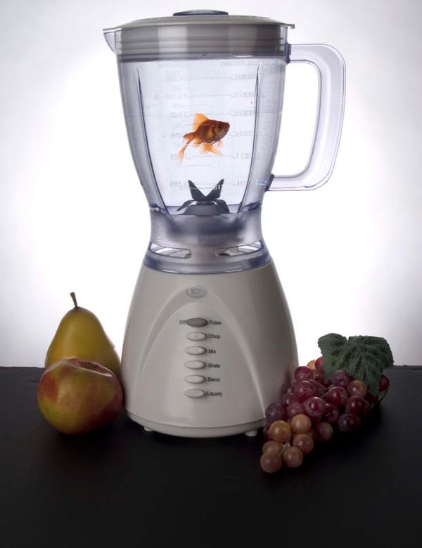 blender fish by nic anzal1 on deviantart