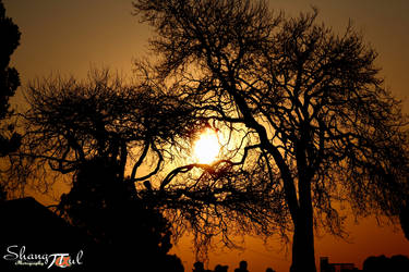 Tree's Lament by analysis230