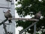 Signal Birds