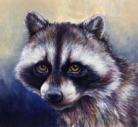 Raccoon by glait