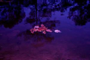 Floating by jbillitteri