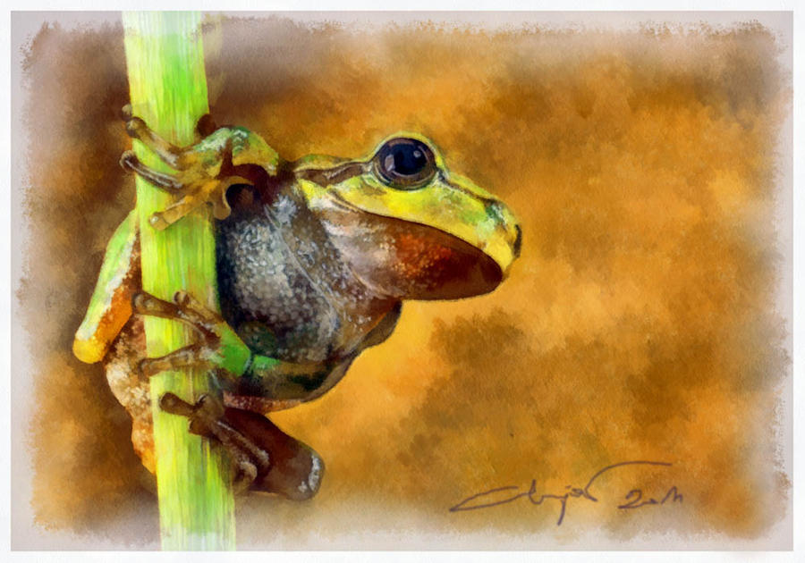 Green frog by A2812