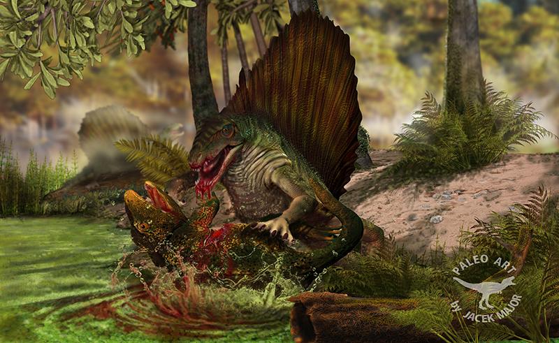 http://fc05.deviantart.net/fs71/f/2013/006/9/a/dimetrodon_the_hunted_eryops_by_a2812-d5qmk76.jpg