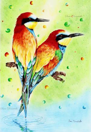 Rainbow Birds by saraPortrait