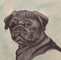 Alex the Pug