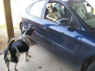 Shelby vs Boney