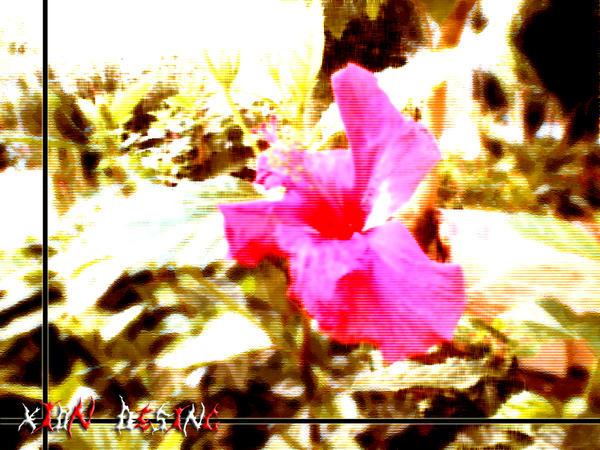 La Galería Obligada de Xion (Si, es lo que hay) Winter_Flower_by_xion_desing