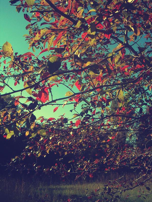 Vintage Fall by christinavk