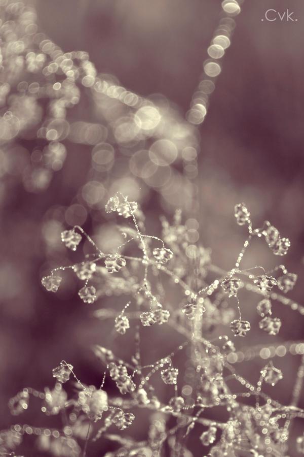 Crystalline by christinavk