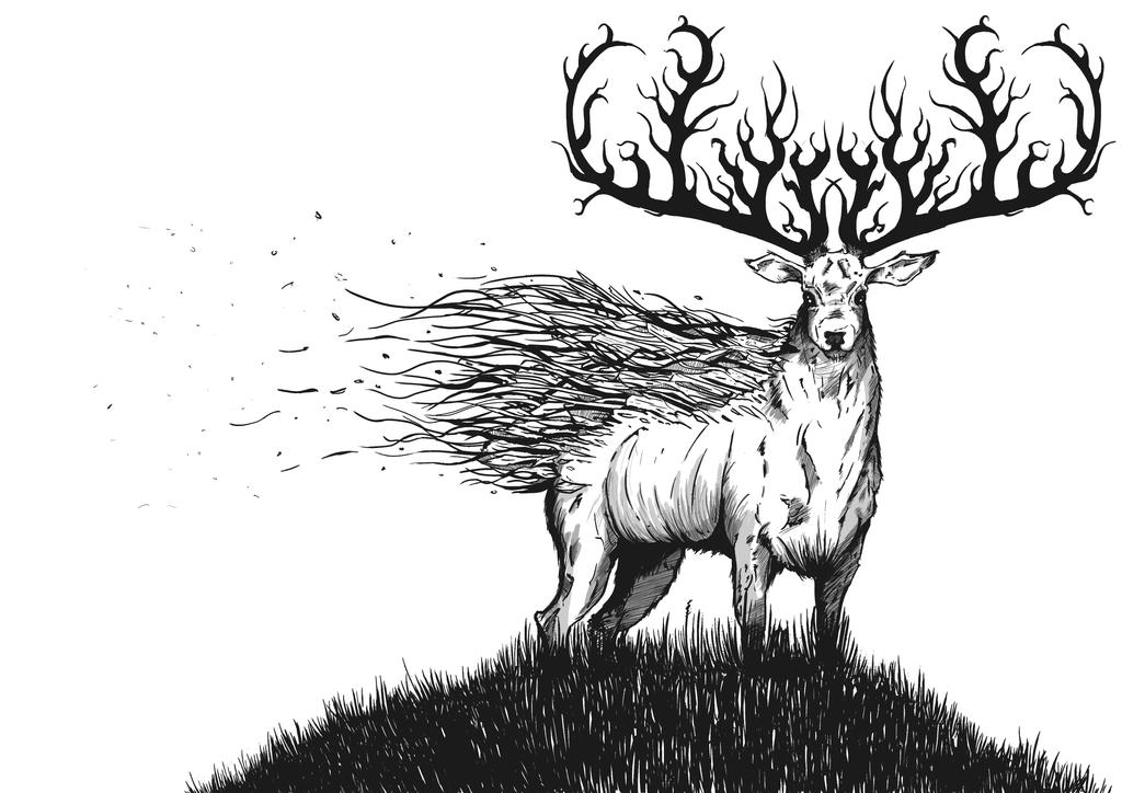 Line Drawing Deer : Fallow deer coloring pages free