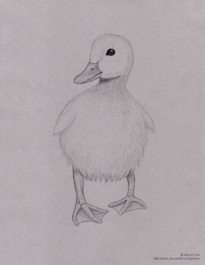 duck in pencil by iduck on deviantart
