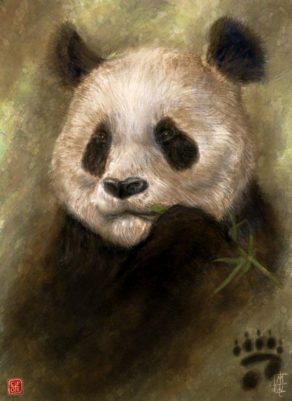 Panda by Thunderbird111