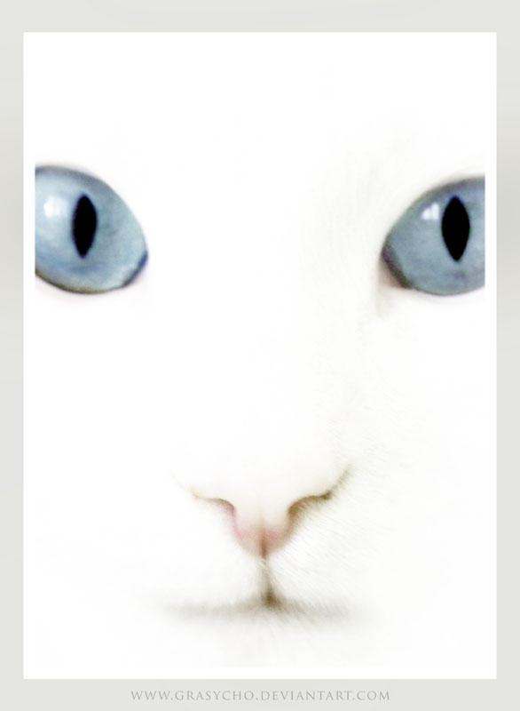 Grasycho's Profile Picture