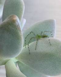 Spiders don't succ