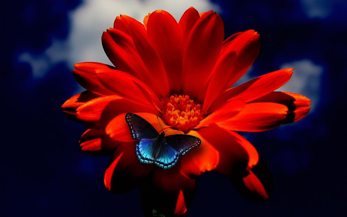 butterfly on orange flower by mystery nicky on deviantart