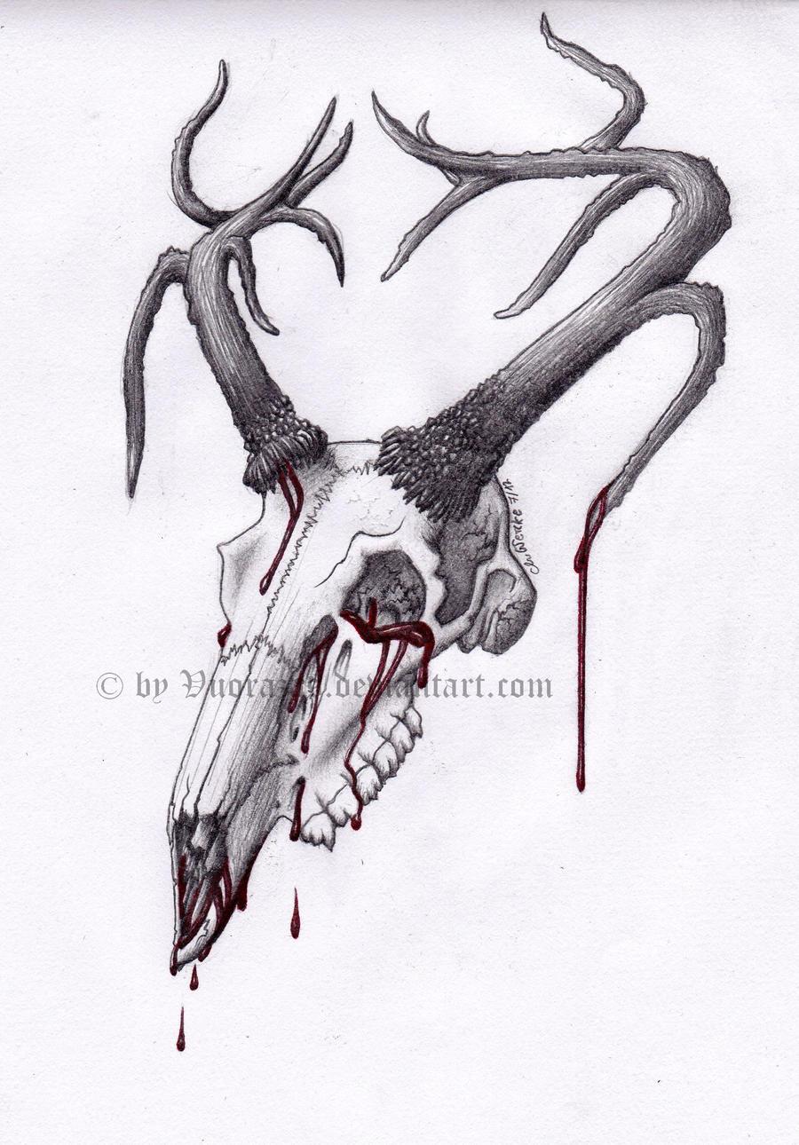 White Tail Deer Sckull Drawn: Deer Skull By Vuorazas On DeviantArt