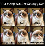 Emotions of Grumpy Kitty