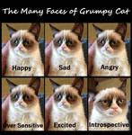 Emotions of Grumpy Kitty