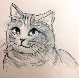 Cat by mametake