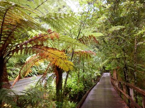 Rainforest Get-away