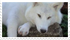 White Wolf Stamp || F2U by poppychu