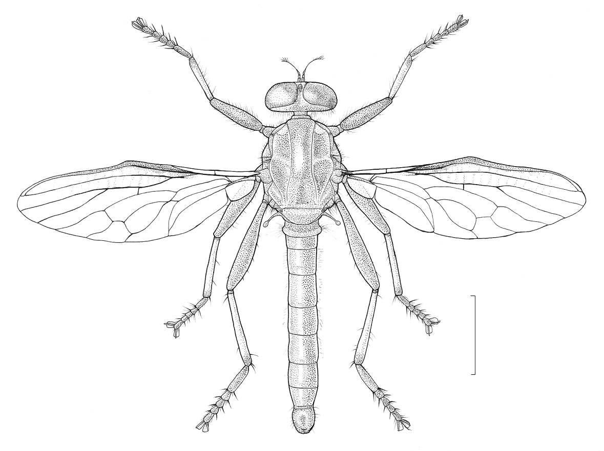 Diagram Of Robber Fly - Information Of Wiring Diagram •