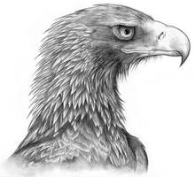 Wedge-Tailed Eagle commission