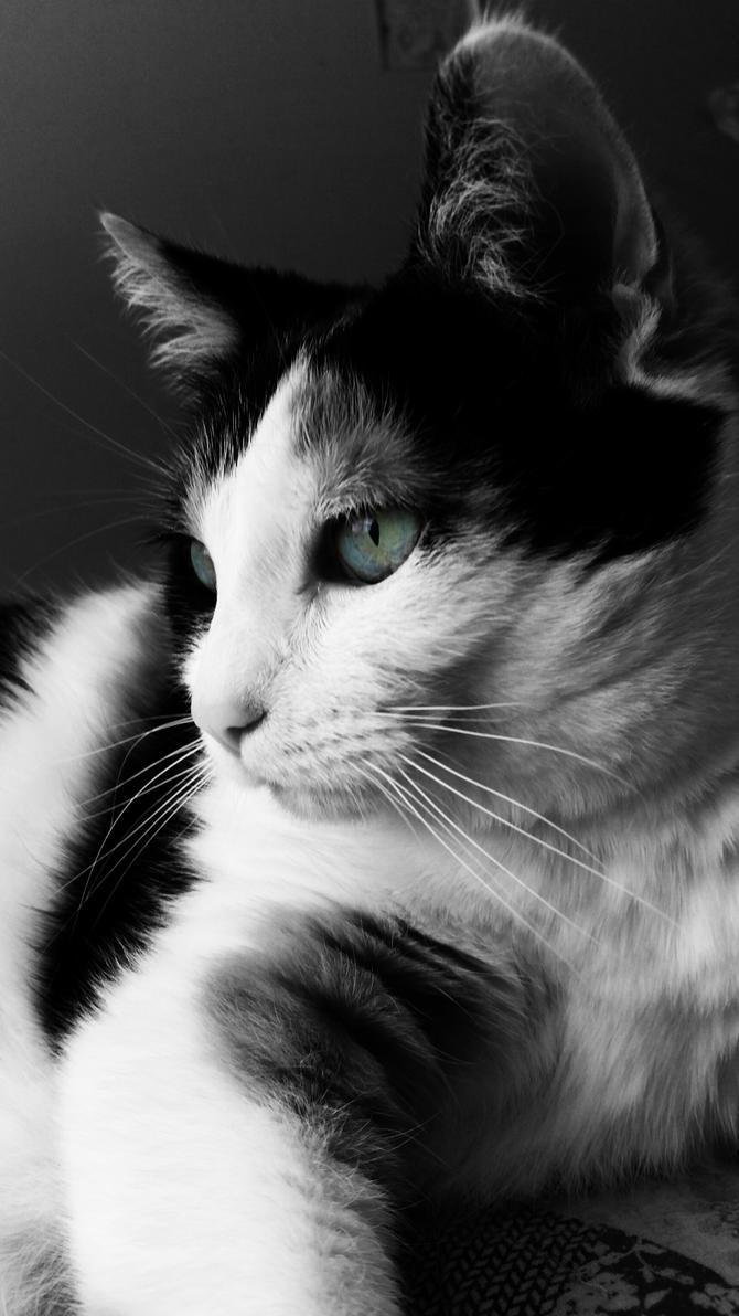 Eye of the tigress by FoxyDivaArtist