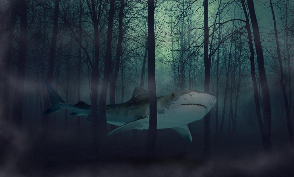12464 Dark Forest 1920x1080 Nature Wallpaper By Yektaaksit