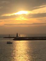 Corona del mar-Shimmer