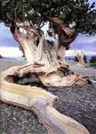 People In a Tree by inspiredcreativity
