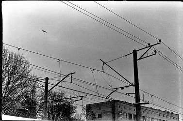 wire by choeba