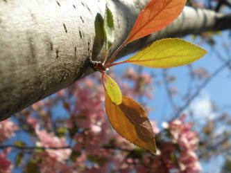 Springtime by kawaiixoxsmiles