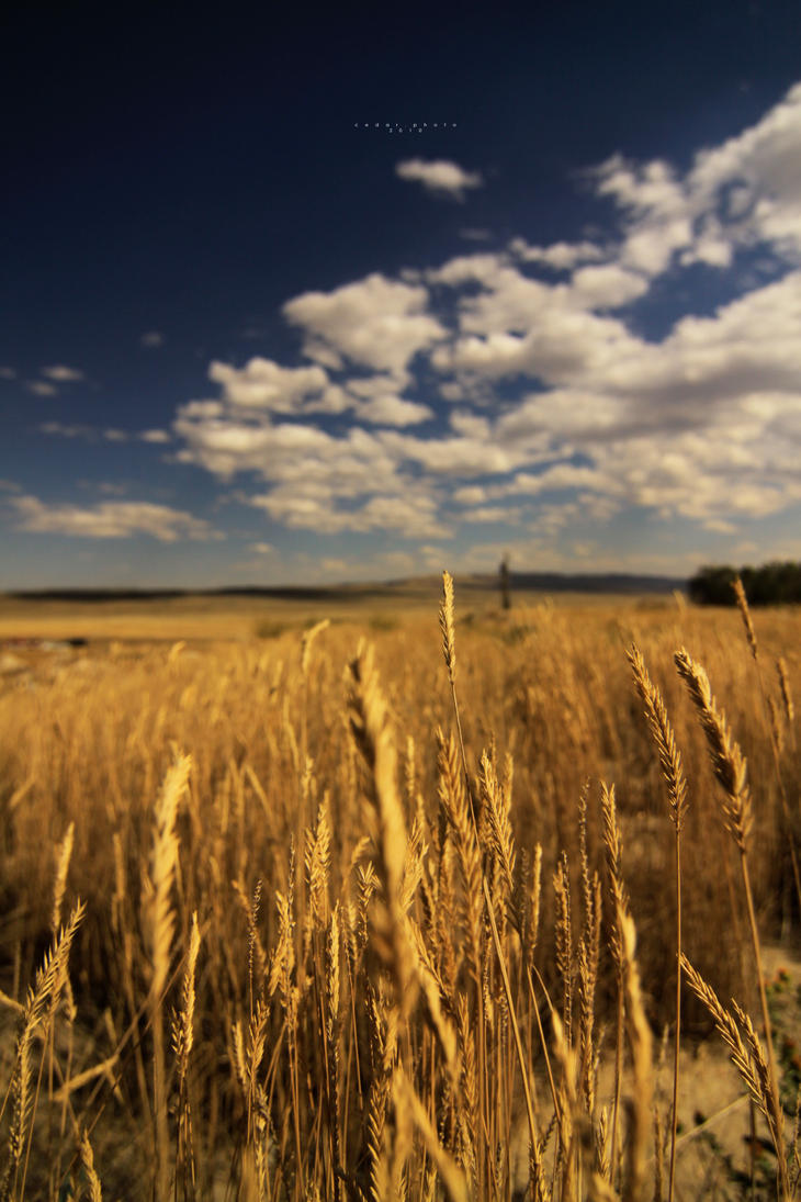 Let these dreams, be dreams. by Cedardar