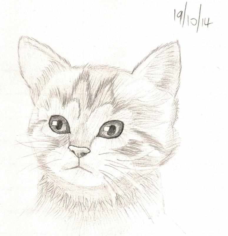 S017 kitten by DoctorFruitbat