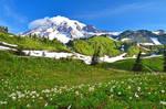 Mt. Rainier by yo13dawg
