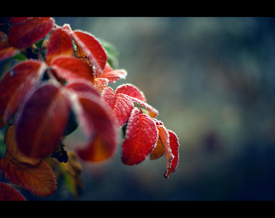 A m b e r leaves by SaturnineX