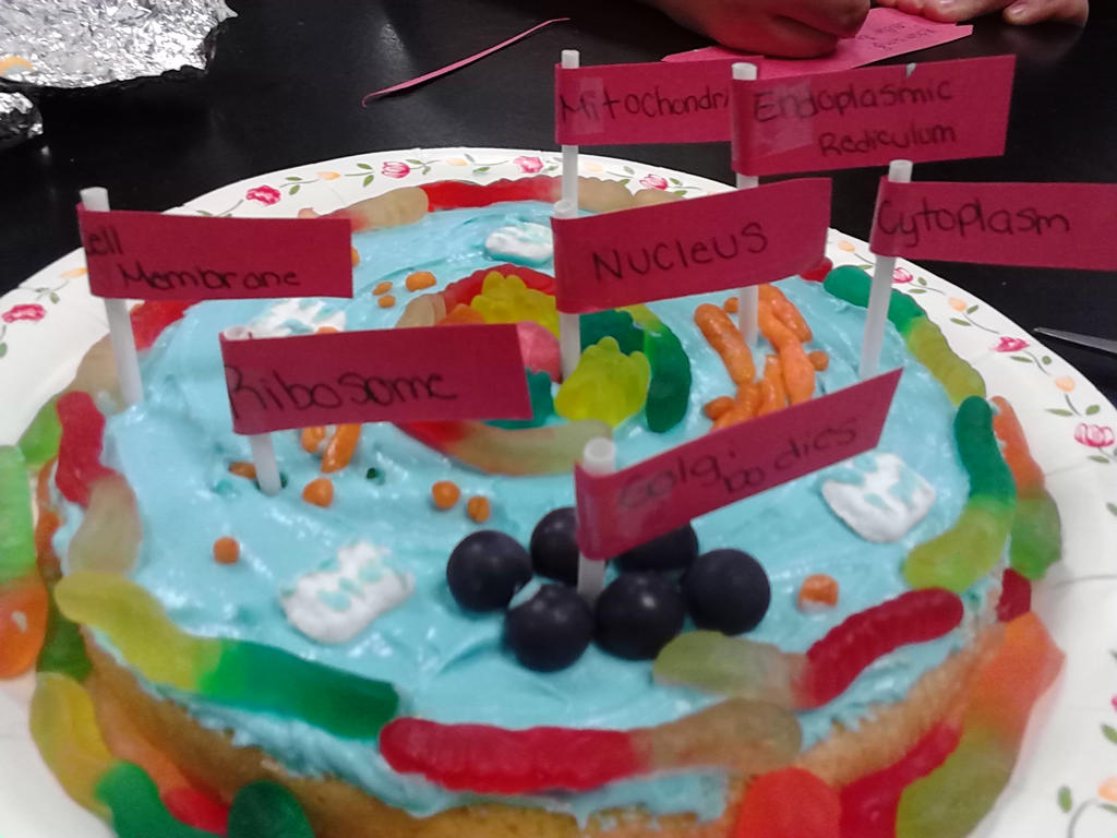 Animal Cell Model Made Out Of Cake