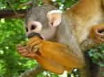 monkey by roku98