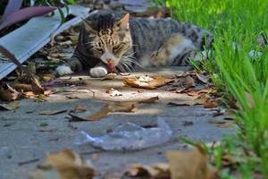 Dirty Cat 2