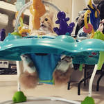 Nobody puts baby in the... bouncer? by AmandaJayne00
