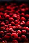 Blood Fruit by Project-Pestilence
